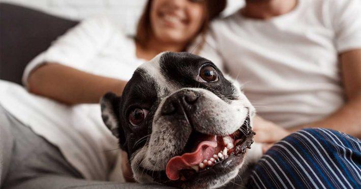 Consigli per Accogliere il Cane in Casa - Blog Assaperlo
